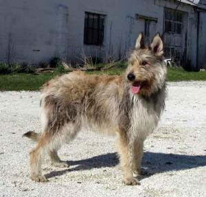 Hund in Cuxhaven